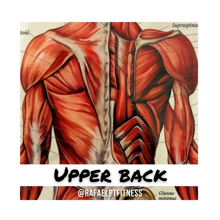 back muscle spasms rafael pt fitness in austin tx